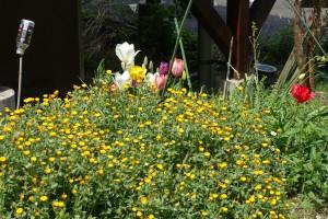 四季折々の草花もお出迎え